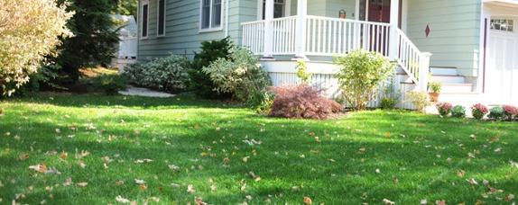 fall lawn fix 2