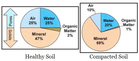 healthy compacted soil