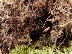 invest in soil
