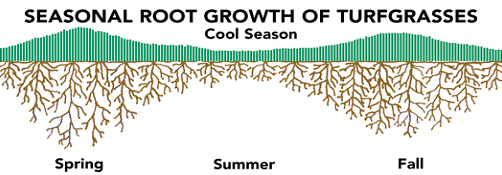 seasonal-root-growth